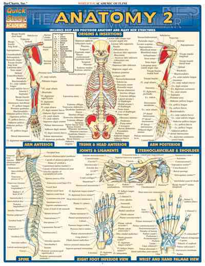 Anatomy 2 Quick Study Reference Guide By Barcharts, Inc. (COR)